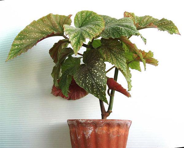фото домашних растений.